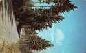 Postcard Tall Pines SKU 1817PC